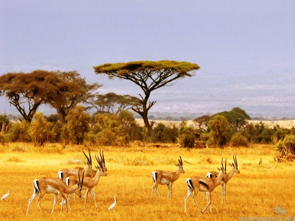 En safari avec une équipe de safarivo.com
